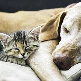 Elderly dog and kitten